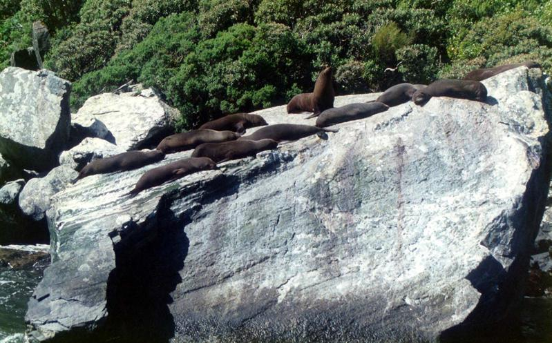 Seals milford sound