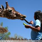 Rio Grande Zoo 1.jpg