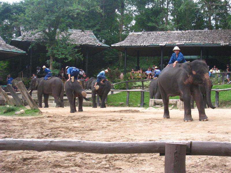 大象都很聰明