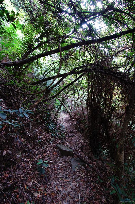 荷蘭灣徑Brewin Path