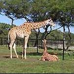 san_antonio_wildlife_ranch2.jpg