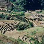 Terraced fields at Sapa