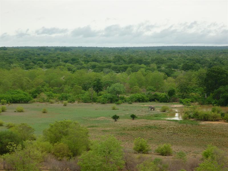 Mole Nationalpark - einsamer Elephant