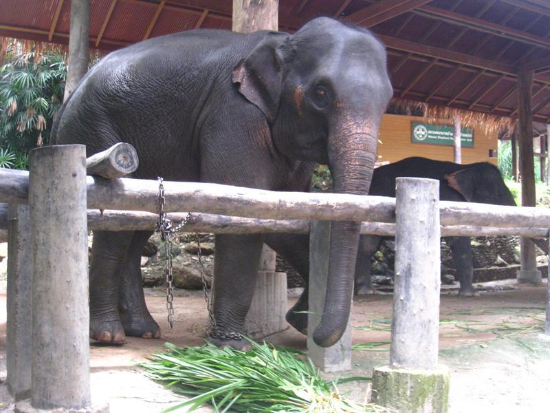 哇~~大象真的好大喔