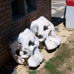 Elephant skulls / Cranes d