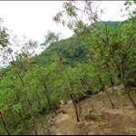 DSC_6591 登山途中.jpg