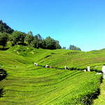 My Trip to Cameron Highlands