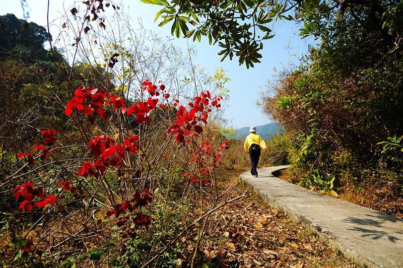 荔枝窩自然步道