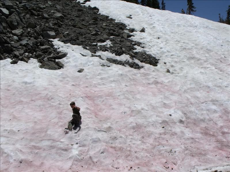 There is an alge that makes it turn pink, but only can be seen in old snow