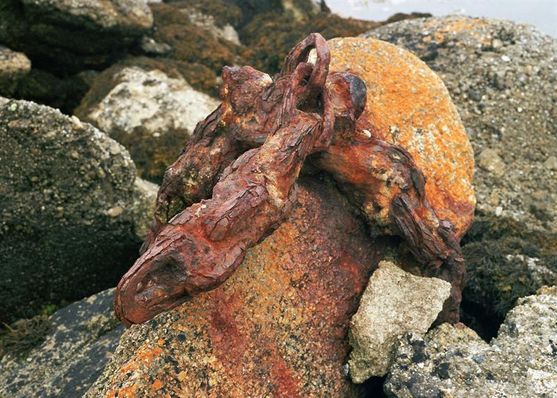 rusty dead bird