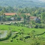 neat rice-terraces.