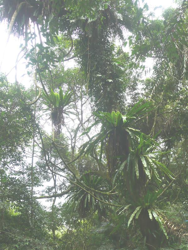 棲蘭森林步道 (14).JPG