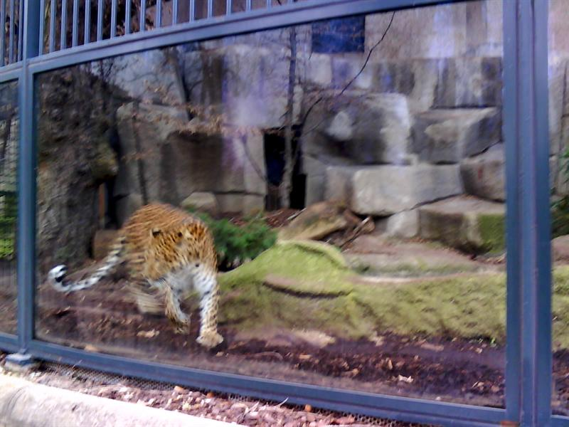Jardin De Plantes Zoo