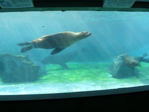 Ojikoen Zoo
