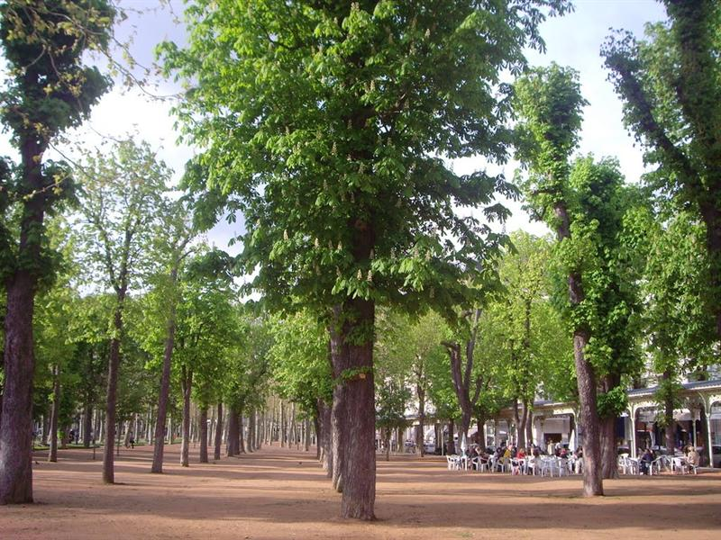 歌劇院前廣場  樹都很整齊