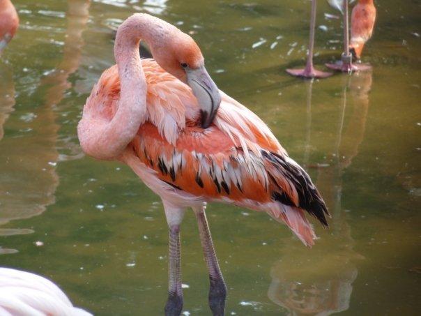 Ojikoen flamingo 2