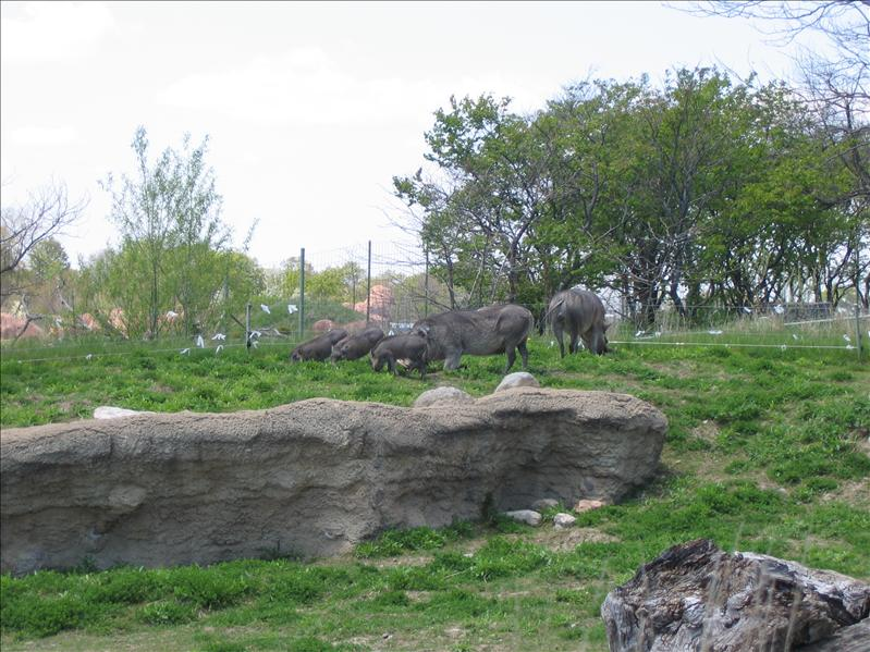 Toronto Zoo - 17