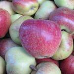 appels uit cothen