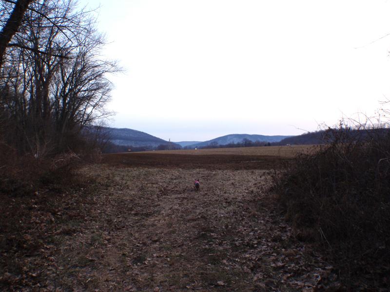 Edgefield