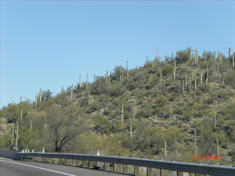 More cactus forest