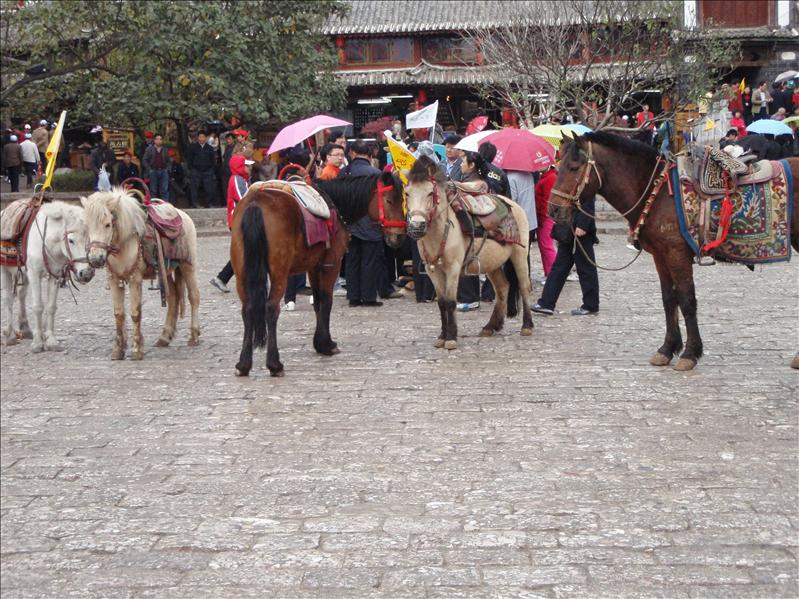 horsies, Lijiang Old Town