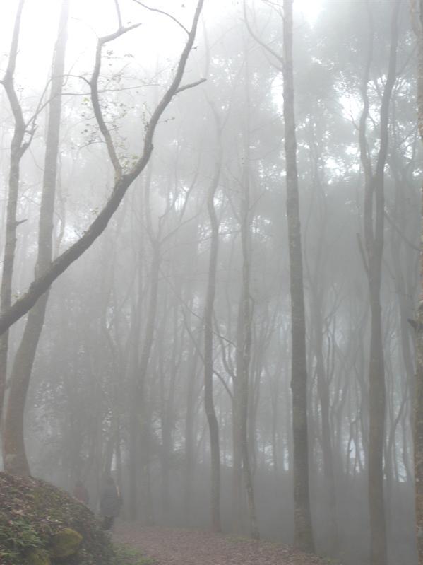 迷霧東勢林場