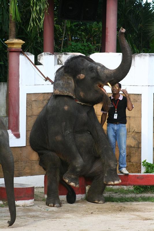 Elefant show