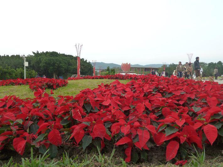 Taipei 2010 Flora Expo