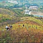 DSC_1637 破舊鐵絲網下的山行者沿坡脊上攀.jpg