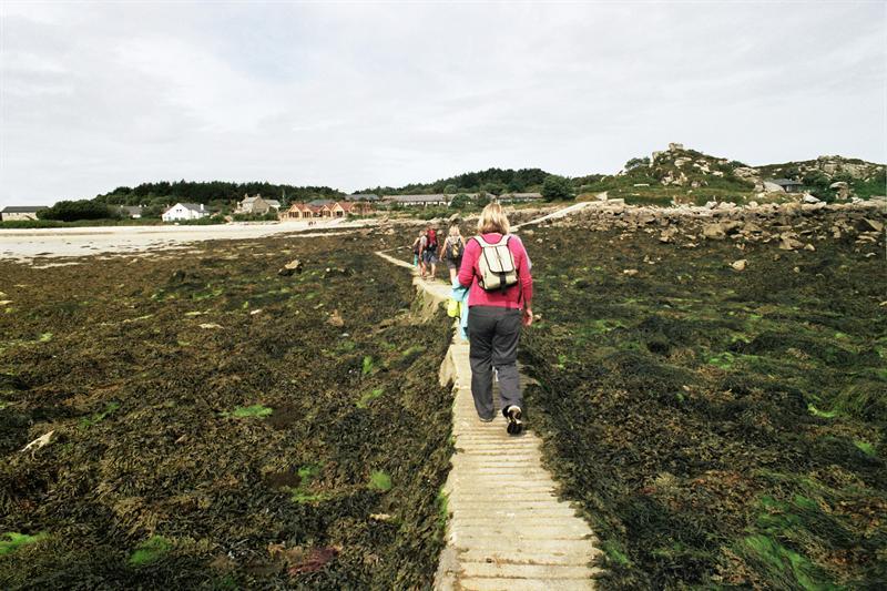 Seaweed avenue