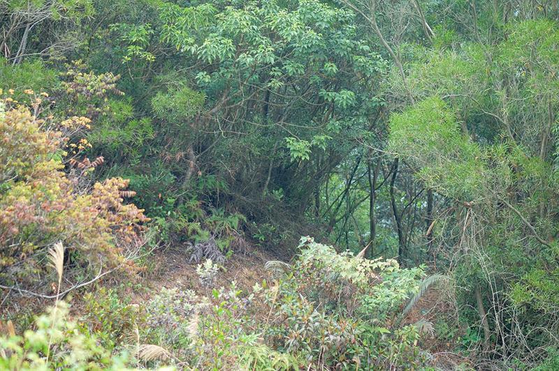 過了標距柱W109不久轉上278米山頭