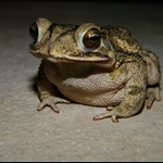 frog 043.jpg