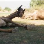 3 days camel trip, Jaisalmer, India    nov99