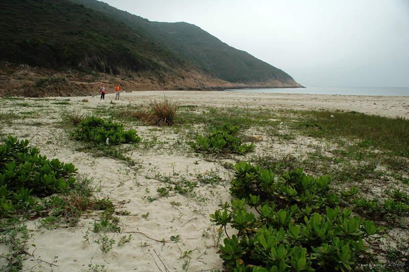 浪茄仔沙灘