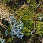 grass, lichen, moss