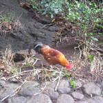 2011 Maui Day 9