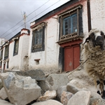 Road to Lhasa 7.  Gyantse   oct11