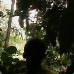 8. Sumatra - Orang-utan.JPG