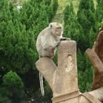 獼猴 (3).JPG