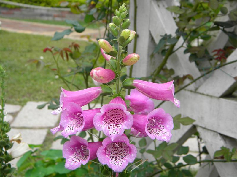 士林官邸鮮花