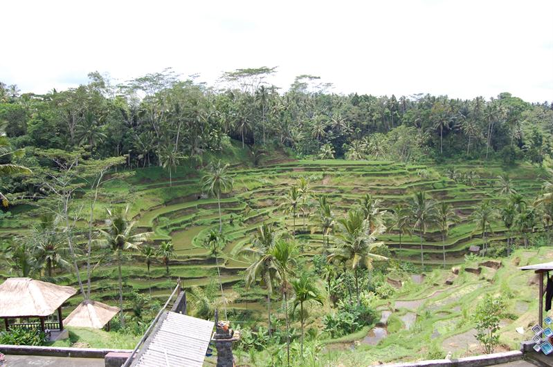 the famous rice terrace
