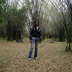 Bamboo Forest @ Nisargadhama