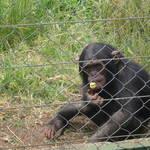 Centre de Rehabilitation des Primates de Lwiro-lwiro-RDC