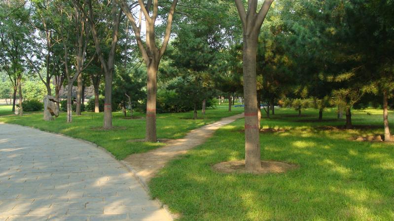 戚城公园园林