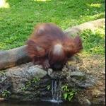Bogor safaripark