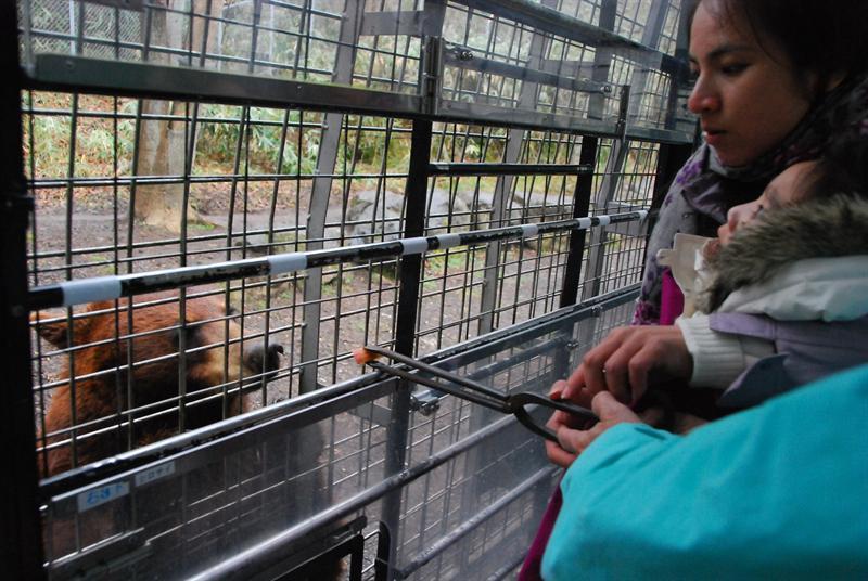 熊吃紅蘿蔔和蘋果