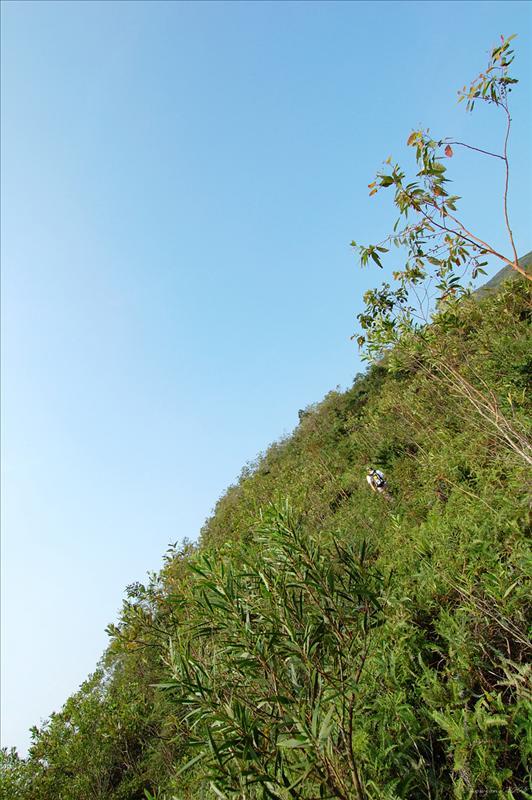 上山段路為不太陡的草坡及植林區