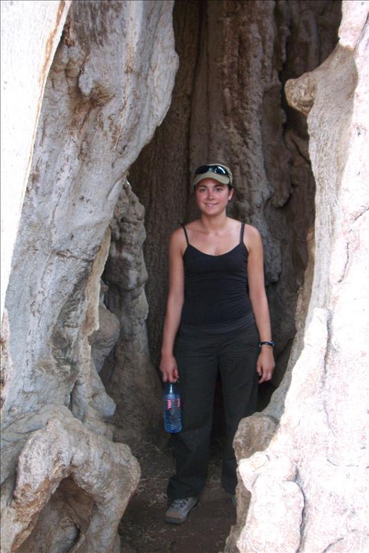 In a baobab / dans un baobab