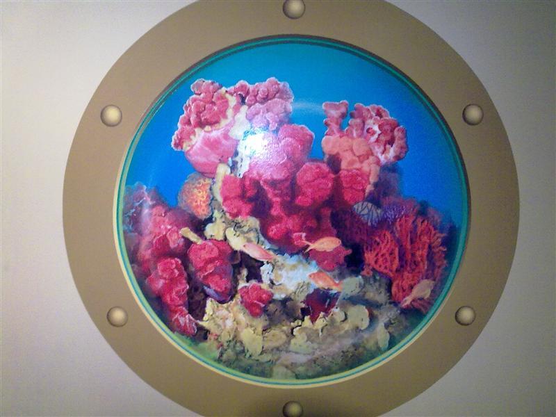 會動的珊瑚~