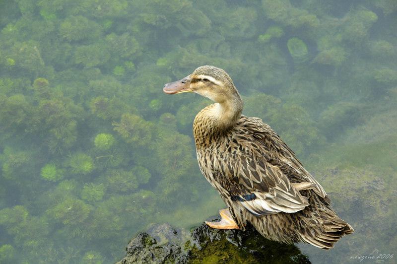 "靖西鵝泉Equan ""Goose"" Spring"